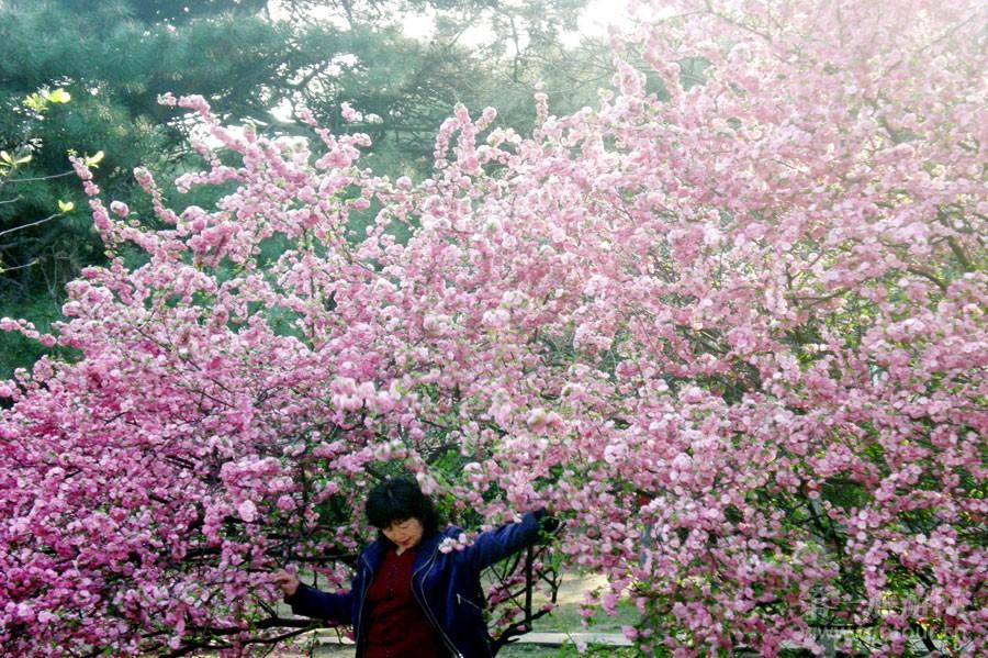 桃花盛开--林芳竹摄影<br>